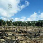 NESREA Reveals Lead Cause Of Climate Change