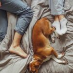Sleeping Next To Your Pet Is Better Than Your Partner, See Why