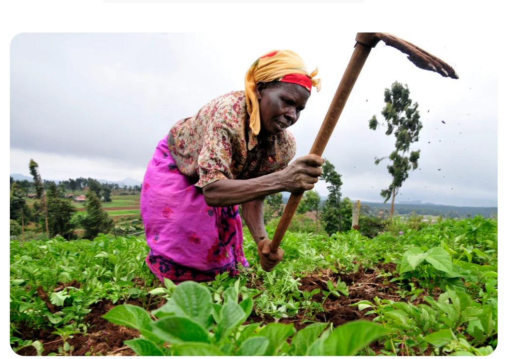 Why you should stop growing vegetables with fertilizer; Prof Musa