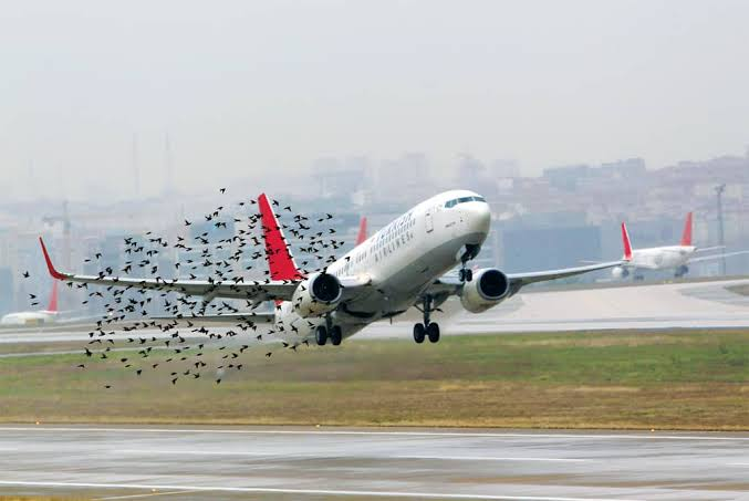Element to consider in checking risk and hazard in aviation
